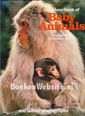 All Colour book of Baby Animals